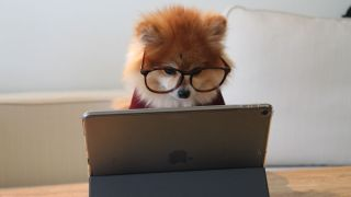 Intelligent dog in glasses looking at computer