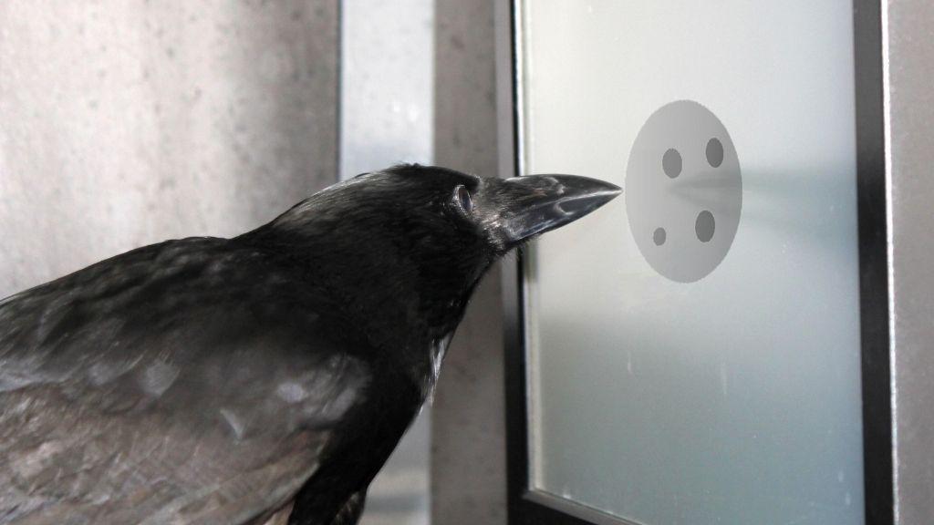 Crows understand the 'concept of zero' (despite their bird brains)