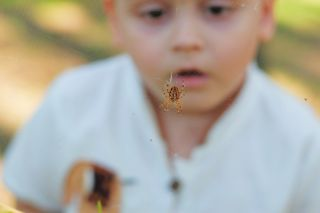 Baby looking at spider on its web.