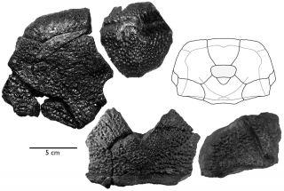 b-rex-fossils