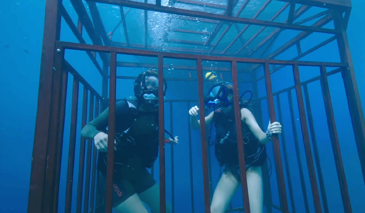 47 Meters Down diving in cage