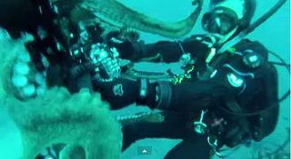 wrestling giant octopus