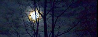 moonlight, nocturnal animals