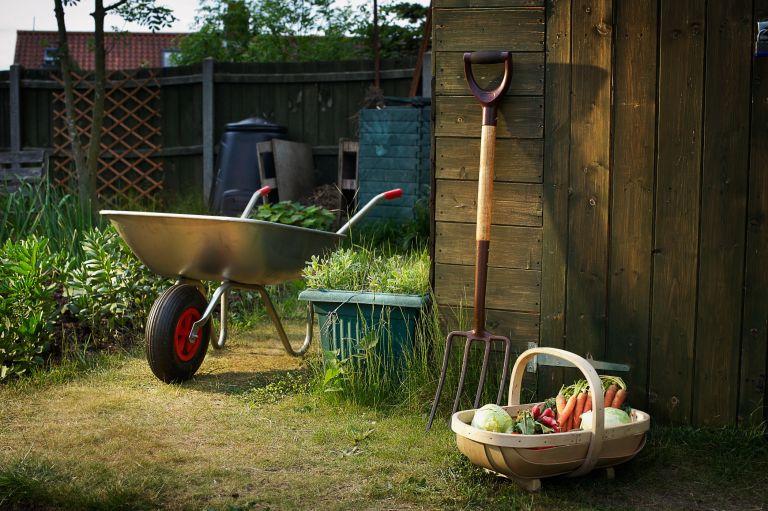 garden essentials for the backyard