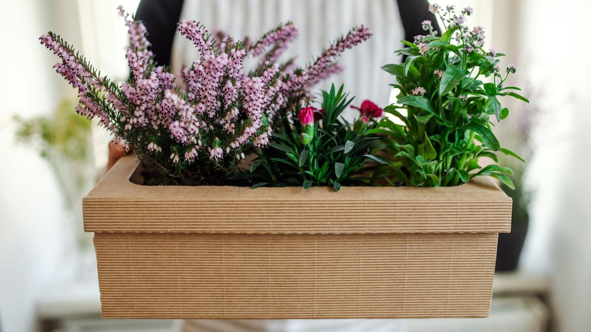 RHS urges gardeners to watch out for these warning signs when buying plants online