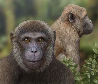 illustration of oldest monkey