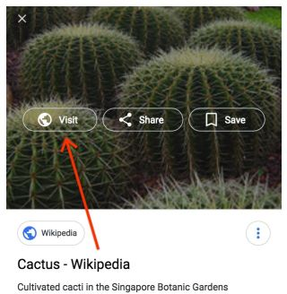 Google image search of a cactus