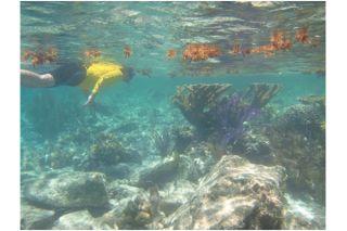 marine parasites, oceanography, marine ecology