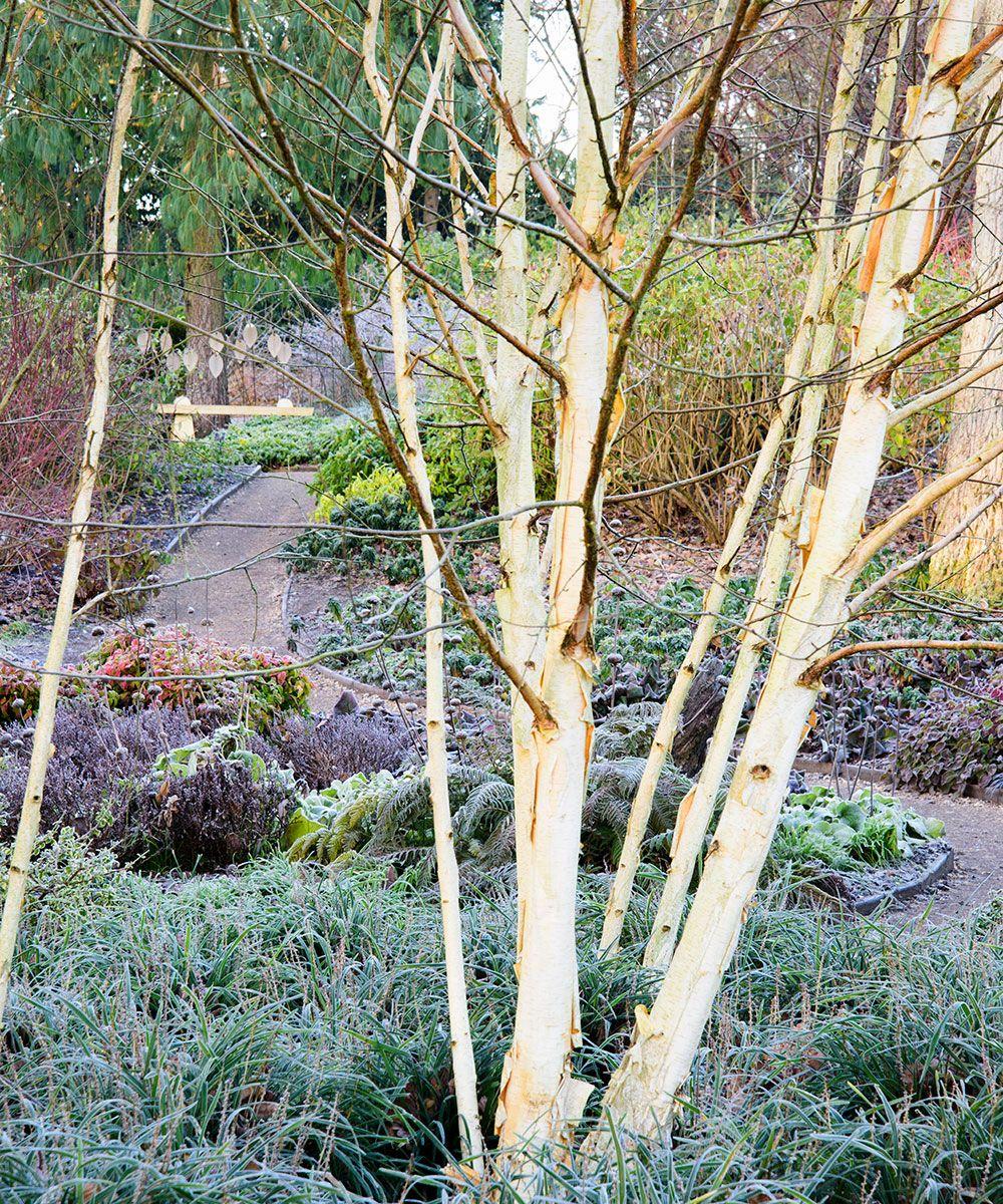 10 inspiring winter garden ideas and expert advice