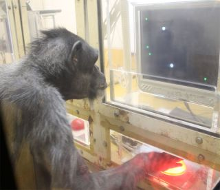 chimp playing a video game