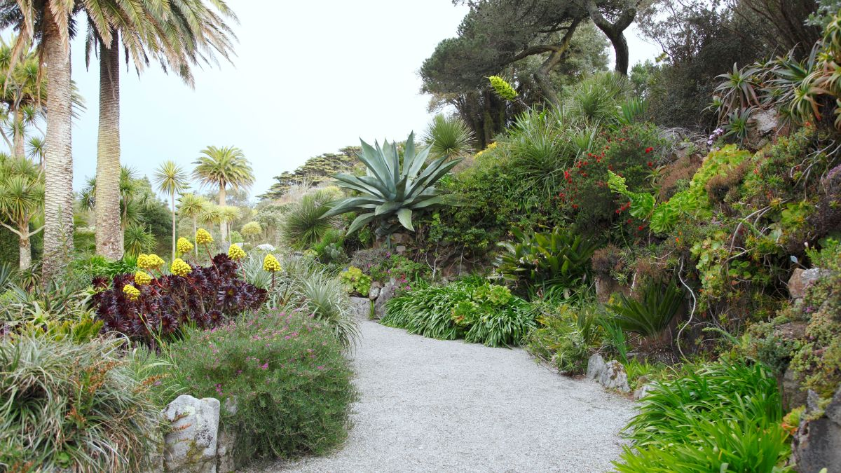 Tropical garden ideas – 10 tips to turn your garden into an oasis of color and movement