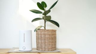 Do air purifiers help with bad smells: Image shows air purifier next to a plant