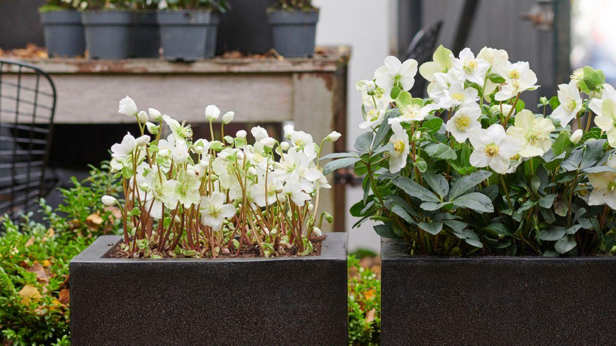 Best plants for winter colour
