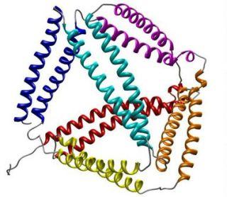 protein origami