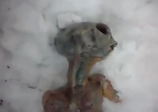 Supposedly this is an image of a dead extraterrestrial alien near a tree stump in a snowy field in Irkutsk, Siberia