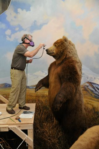 conservation, theodore roosevelt, american museum of natural history