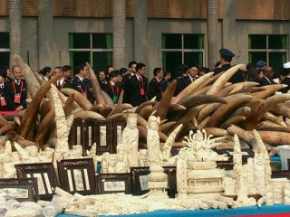 China's ivory crush