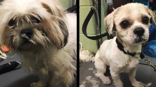 NYC shelter dogs before and after shot of one of the rescue dogs