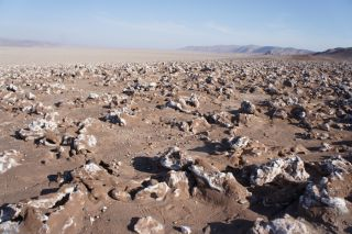 extremophiles, microbiome, microbes, great salt lake