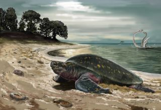 Ancient Sea Turtle