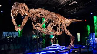 The exhibit is built around Victoria the tyrannosaurus rex, one of the most complete fossilized t-rex skeletons on record.