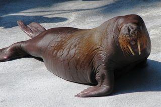 seal-02