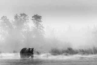 bear at waters edge