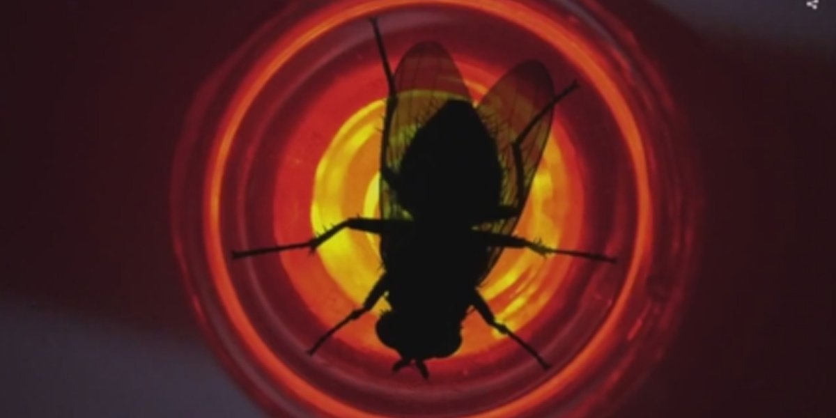 """The fly on the red light in """"Fly"""" on Breaking Bad."""