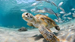 Can marine animals, such as these turtle and fish, drown?