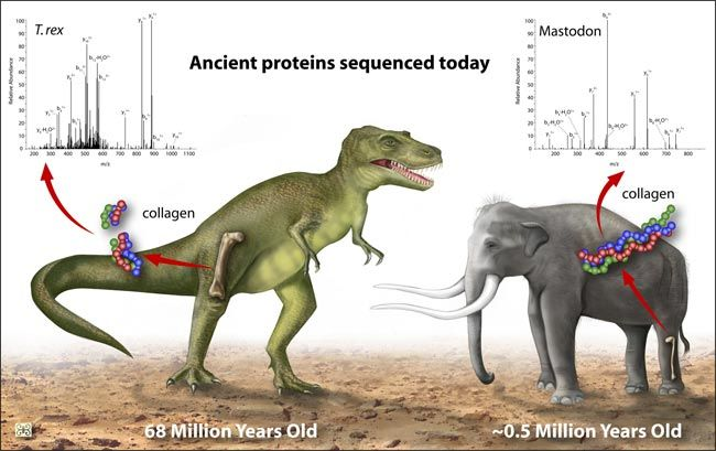 T Rex Related To Chickens Live Science