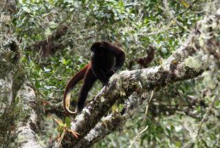 yellowtail-monkey-101123-02