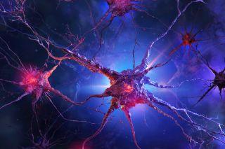 Ilustration of nerve cells.