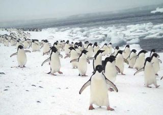 Life at the South Pole