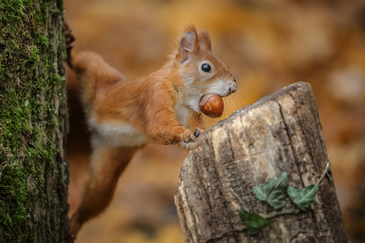 How Do Squirrels Remember Where They