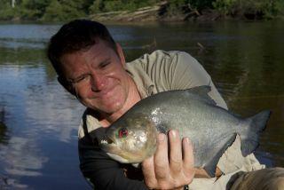 Steve Backshall with a piranha