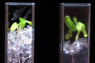 see-through soil, farming, improved crops