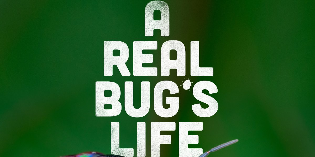A Real Bug's Life title card