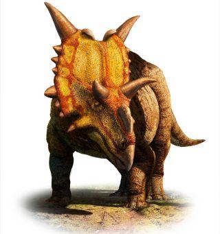 Illustration of Xenoceratops horned dinosaur