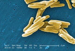 drug resistant microbes