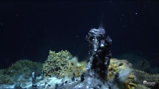 Black smoker hydrothermal vent life
