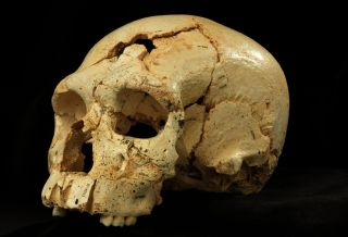 A hominin skull (dubbed Skull 17) from the Sima de los Huesos cave site in Sierra de Atapuerca, Spain.