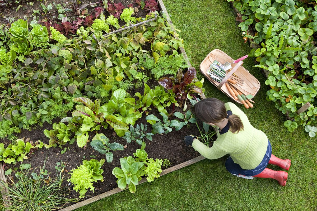 How to make raised beds