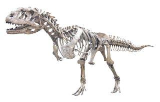 Majungasaurus crenatissimus skeleton