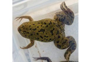 biology, human body, science in policy and society, ecology, population collapse, amphibians
