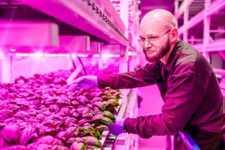 LED growing lights, agriculture, food production