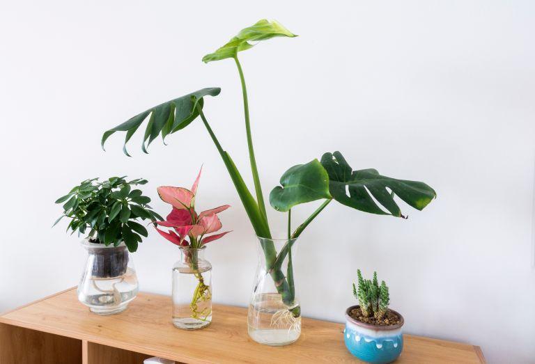 houseplant cuttings