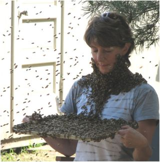 "NSF researcher Marla Spivak demonstrates how to wear a ""bee beard"""