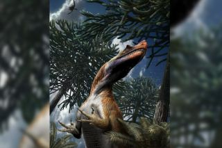 Saltriovenator Four-fingered dinosaur