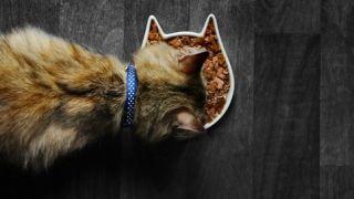 should i elevate my cats food bowl