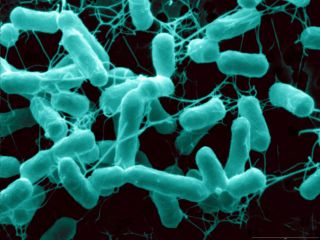 Salmonella Hides Its Tail To Stay Invisible To Immune System Live Science